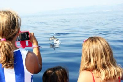 Seasafari Whale Whatching - Fotografare i delfini